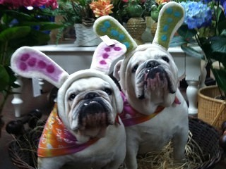 Two dogs in Easter hats